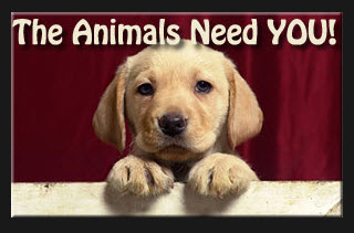 how to help animals in need for free